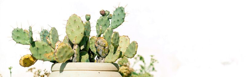 Is cactus leather sustainable?