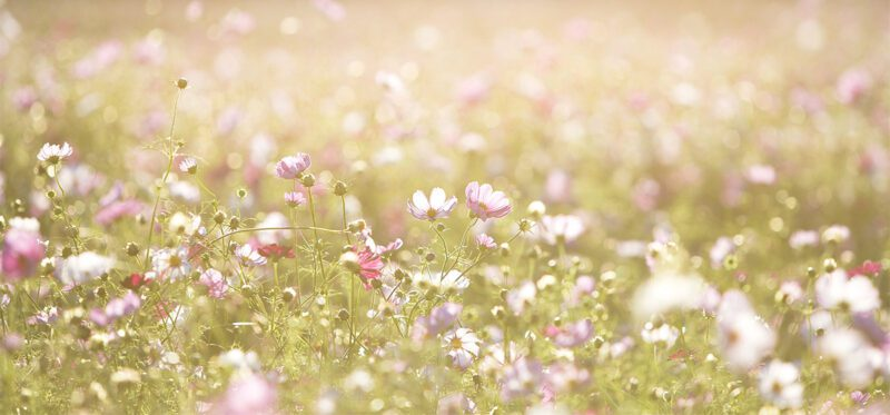 Wildflowers are a great alternative to grass!